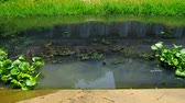 eutrophication condition of waste water in the canal with water hyacinth above the surface