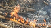 fire is burning the bamboo shoot on the ground