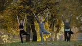 душа : Group of Young women doing Yoga action exercise healthy in the park. Health lifestyle concept.