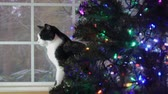bombki : cat behind christmas tree Wideo