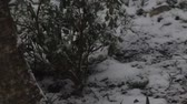 climate change : snow slowly covering garden