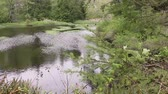 river rapids : pan on green tall grass and shallow wetland pools