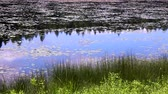 waterlily : sky reflected in a pond Stock Footage