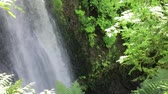 northwest : maples and fern around forest waterfall Stock Footage