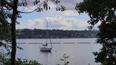 northwest : sailboat water and the shoreline of lake washington