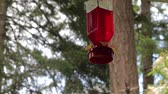 feeder : humming bird hovering under feeder Stock Footage