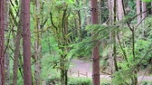 fence : trail through pacific northwest forest in summer