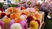 Flower market such as Chrysanthemum, Dahlia and others.
