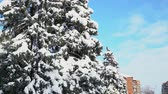 snowy day blue sky pine tree in snow city christas day Vídeos