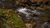 deciduous : Autumn forest. Forest in the mountains. Mountain river. Stream with cold water. Stock Footage