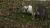 изумление : Beautiful gray striped cat playing in the yard.