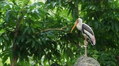 cegonha : Big painted stork bird standing on the rock waiting to hunt over green leaves background