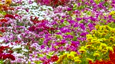 vime : Flower garden Variety of colors Beautiful nature in Southeast Asia