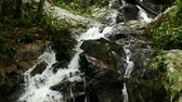 rushing waterfall in the mountains with tropical forest. Beautiful nature background. Stock Footage