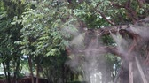 umidade : Fog water or mist spray nozzle setup on tree for watering plant at flower garden