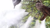 Fog water or mist spray nozzle setup on tree for watering plant at flower garden