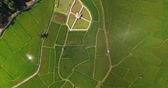 lucht : aerial view birds eyes view shot on a rice field. Rice farm Map 4K DCI