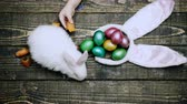 zając : Easter eggs on wooden background. Close up of a boys hand that feed hare with carrot on a wooden table with Easter eggs. Happy Easter spring time. Rabbit with eggs on wooden background.