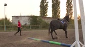 dressage : Coach teaches the horse to run with a whip and a long rope in the arena at the racetrack. Slow motion. Training for horse riding.