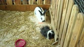 заяц : Cute fluffy bunnies eating carrots in a cage, close-up. High resolution.