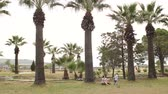 palma : Mom is sitting on the ground in the Park near the big palms, to her running her little son. A little boy runs among the palm trees to his mother and hugs her. Slow motion. Wide shot. Stock Footage
