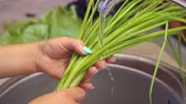 uzun ömürlü : Close-up of womens hands washing fresh green onions in the kitchen sink under water. Slow motion. Stok Video