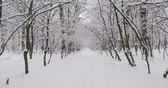 betulla : Veduta aerea Winter Forest in Snow Filmati Stock