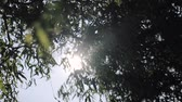記述的な : Sunbeams shining through lush green leaves on branches in tree