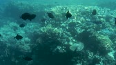 dahab : Tropical fish on coral reefs