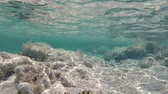 dahab : Beautiful colorful fish in Red sea Stock Footage