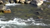 rzeka : Video of a river at Caldes, South Tyrol, Italy.