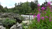 norveç : River space near the town of Bjorli in Oppland, Norway. Stok Video