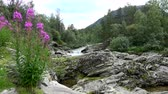 River space near the town of Bjorli in Oppland, Norway. Wideo