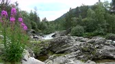noruega : River space near the town of Bjorli in Oppland, Norway. Stock Footage