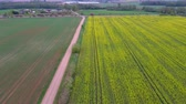 масличные культуры : Flight Over Field With Flowering Canola Flowers and Country Road. Aerial Dron Footage. Flowering Rapeseed Canola or Colza in Latin Brassica Napus, Plant for Green Energy and Oil Industry, Rape Seed.