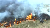 jaro : Fire in the dry grass field.