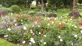 flowerbeds : Flowerbed with bright flowers in the park. Multicolored beauty of nature. Close-up.