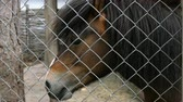 освещение : Portrait of a brown horse behind a fence on farm. Outdoors Close-up. Стоковые видеозаписи
