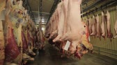 butchered : Carcasses of pork in row in meat factory Stock Footage