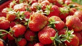 suculento : Delicious red ripe garden strawberry. Natural rural product from garden. Smooth motion, close up.