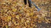 freiner : rake in the foliage in the fall. Closeup of cleaning yellow leaves.