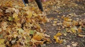 ancinho : Girl prepares a rake for cleaning autumn foliage. A woman is holding a rake. close-up