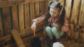 lebre : Small girl on trips to the petting zoo. Girl feeding rabbit with a carrot at the petting zoo.