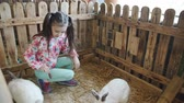 заяц : Little girl stroking and feeding the rabbits in the petting zoo. Стоковые видеозаписи