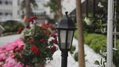 flower head : Decorative lights and rose bushes in the city, near the promenades. Stock Footage