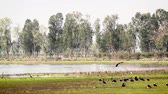 gólya : Water birds in Bardia national park, Nepal - duck, stork, openbill