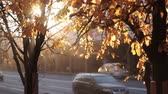 branch : rays of the setting sun shines through autumn leaves