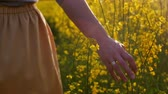 фокус : Womans hand touching flowers closeup. dolly shot Стоковые видеозаписи