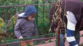 arbusto : Little boy looks at an old man gardening. The boy touches the fence, makes silly face. Slow mo
