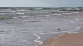 солнечный : A cute white and grey sea gull is walking on a sandy beach.